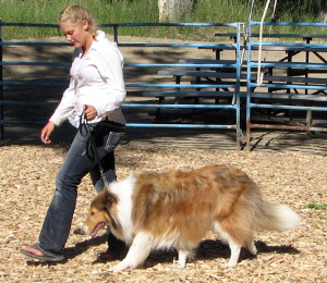 4H Dog Show Montana Musselshell County